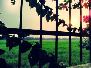 The-Farm-Near-My-College-Photograph1