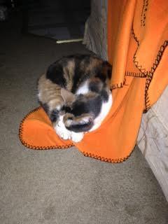 kitty part 1