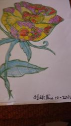 colored-yellow-rose